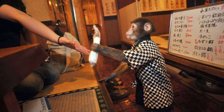 A weird restaurant where monkeys serve you the food