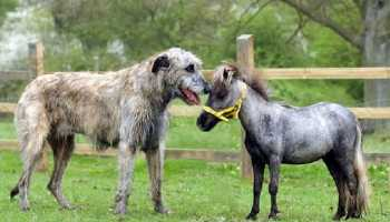 People Tie Knot between a Dog and a Donkey to Protest against Valentine�s Day