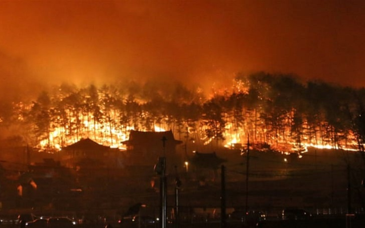 South Korea's Massive Wildfire; One Man Died and Thousands Affected
