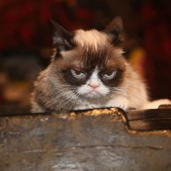 Internet Legend Grumpy Cat Dies At The Age Of Seven