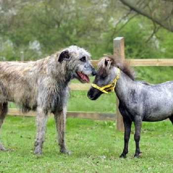 People Tie Knot between a Dog and a Donkey to Protest against Valentine's Day