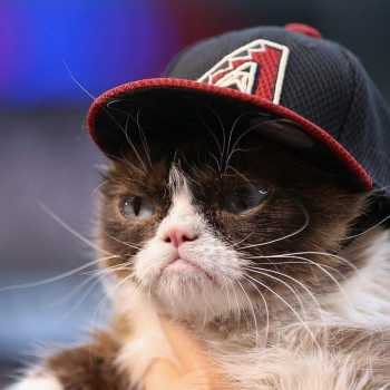 A Cat in California Bags $700,000 from A Court Case: The Grumpy Cat Story